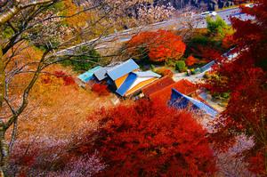 四季桜祭り 003.jpg
